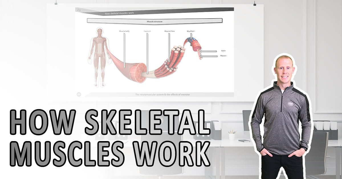 How skeletal muscles work