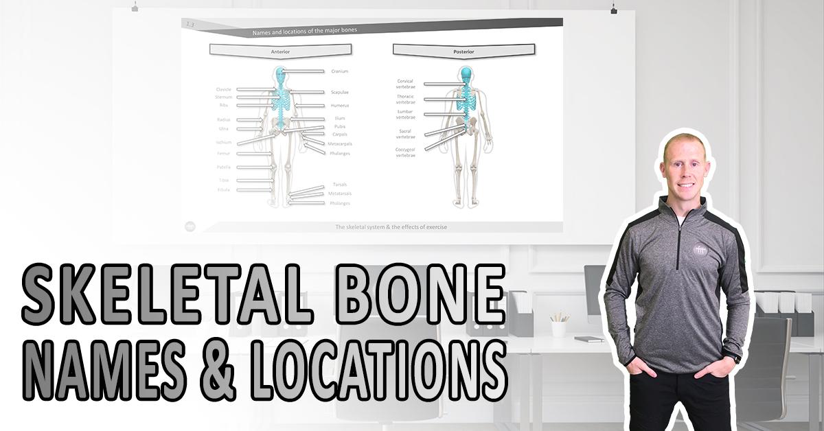 Skeletal bone, names and locations