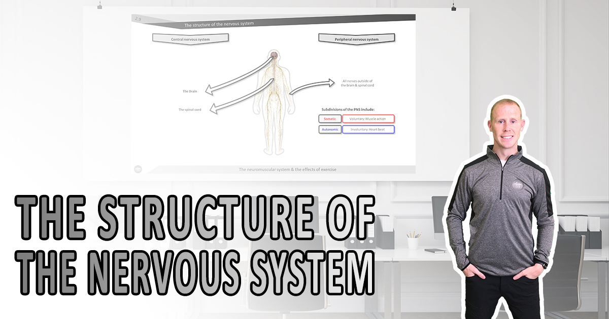 The structure of the nervous system